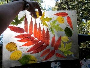 leaf13 300x225 - Осенние поделки: аппликации из осенних листьев. Коллаж из осенних листьев