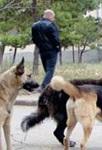 Собаки нападают на ребенка: как себя вести