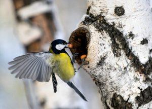 Дмитрий Шеваров: «Гнездо света. Три птичьих истории, рассказанных вечером в канун весны»