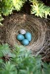 Дмитрий Шеваров: «Гнездо света. Три птичьих истории, рассказанных вечером в канунвесны»