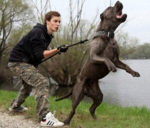 2 sobaka dovolno agressivna - Ребёнок жестоко обращается с домашними животными. Что делать?