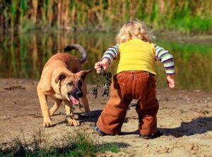 30 05 2019 01 - Ребёнок жестоко обращается с домашними животными. Что делать?