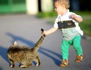 kot napadaet na rebenka i kusaet forum - Ребёнок жестоко обращается с домашними животными. Что делать?