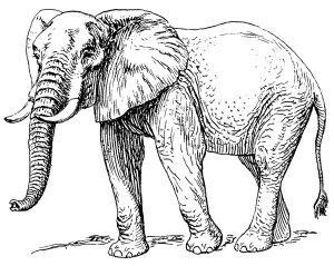 Басня Слон в случае
