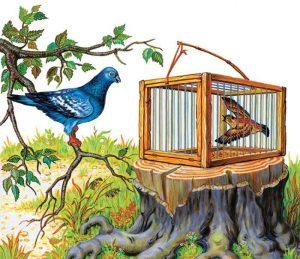 Басня Чиж и голубь