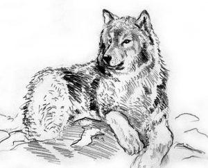 Басня Лев и волк