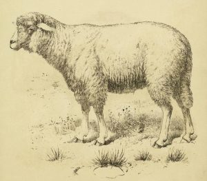 Басня Змея и овца