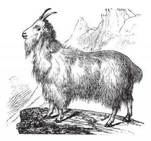 Басня Дикие козы