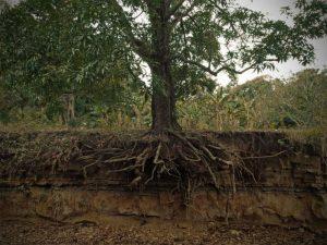 Басня Листы и корни