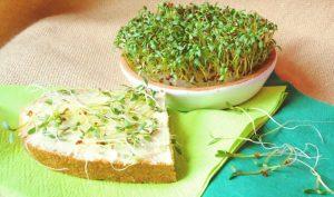 kress salat1 3343925459 300x177 1 - Чем полезен кресс-салат