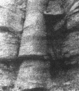 viland 10 3 - Камни и кости