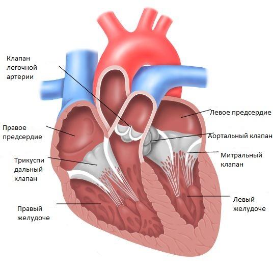 Порок сердца симптомы